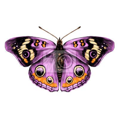 Dessin Papillon En Couleur papillon, ouvert, ailes top, vue, symétrie, croquis le graphique