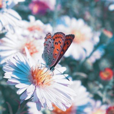 Image Papillon sur la fleur