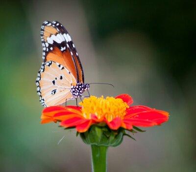 Image Papillon sur une fleur