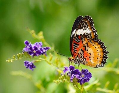Image Papillon sur une fleur violette