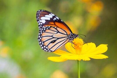 Image Papillons et fleurs
