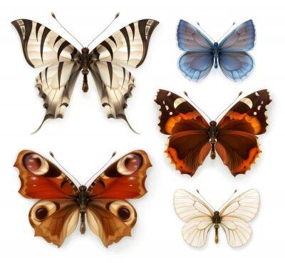 Image Papillons, vecteur, icônes, ensemble