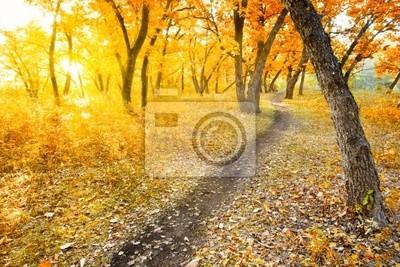 parc de matin d'automne