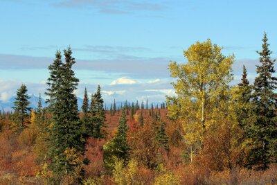 Image Parc national de Denali en automne