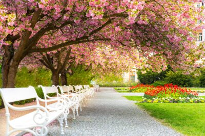 Image Park with blossom sakura, flower lawn and benches