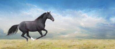 Image Passages noirs de cheval au galop sur le terrain