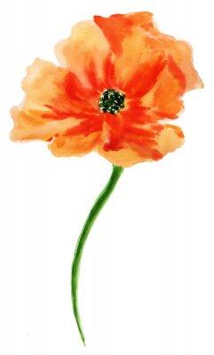 Image Pavot d'orange. Aquarelle peinture, isolé sur fond blanc