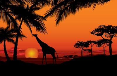 Image Paysage africain avec la silhouette de girafe animal. Savane, nature, Coucher soleil, fond
