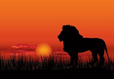 Image Paysage africain avec la silhouette de lion animal. Savanna coucher soleil fond