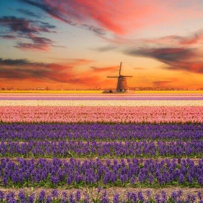 Image Paysage avec des champs de jacinthe