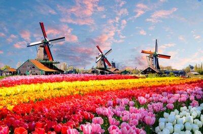 Image Paysage avec des tulipes, des moulins à vent traditionnels hollandais et des maisons près du canal à Zaanse Schans, Pays-Bas, Europe