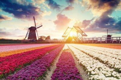 Image Paysage avec des tulipes, des moulins à vent traditionnels néerlandais et des maisons près du canal à Zaanse Schans, Pays-Bas, en Europe