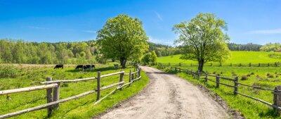 Image Paysage de campagne, champ de ferme et herbe avec des vaches au pâturage dans un paysage rural avec une route de campagne, vue panoramique