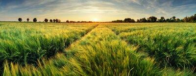 Image Paysage rural avec champ de blé sur le coucher du soleil
