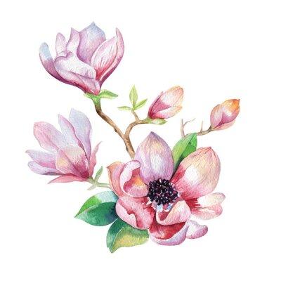Image Peinture Magnolia papier peint à fleurs. Aquarelle dessinée à la main floral