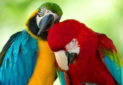 Image perroquets