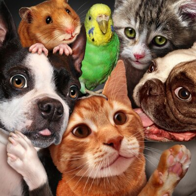 Image Pet Group