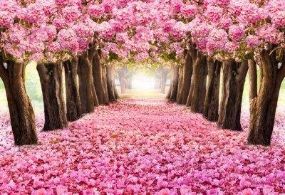 Petale Tombante Sur Le Tunnel Romantique Des Arbres De Fleurs