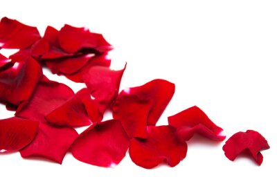 Image Pétales de roses rouges