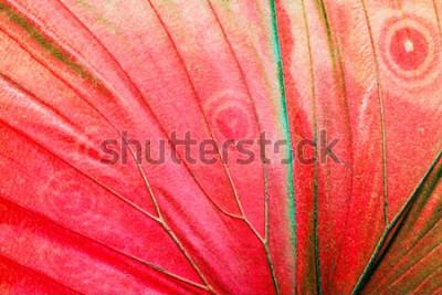 Image Photo macro détaillée d'une aile de papillon tropical rouge