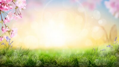 Image Pink cherry tree blossom flowers blooming in a green grass meadow on a spring Easter sunrise background.