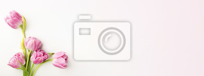 Image Pink tulips on white background with copy space. Top view, banner for website.
