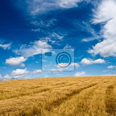 plaine dorée sous un ciel bleu