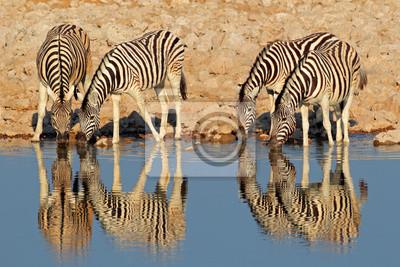 Plaines zèbres eau potable, parc national d'Etosha
