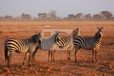 Plaines zèbres, Parc national d'Amboseli