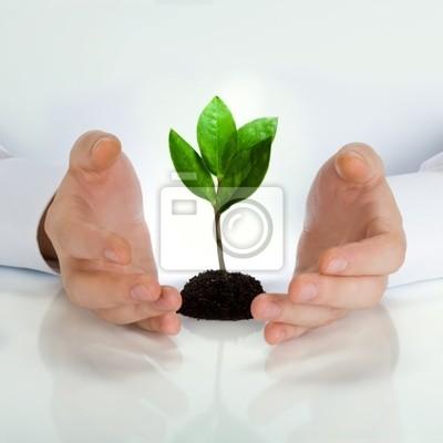 Plante verte entre les mains de l'homme d'affaires