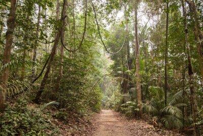 Image Pluie de forêt tropicale