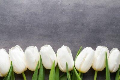Image Plus de tulipe blanche sur le fond gris.
