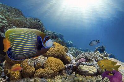 Image Poissons tropicaux sur les récifs coralliens