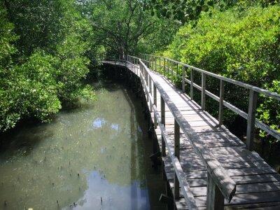Image Pont en bois sur Riverside