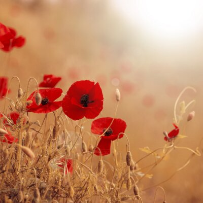 Image Poppies artwork