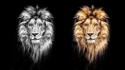Image Portrait, beau, lion, lion, sombre, huile, peintures