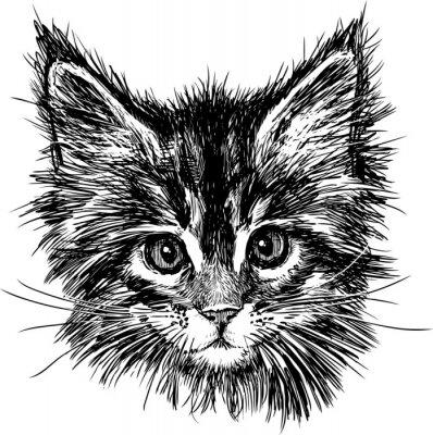 Image portrait de chat