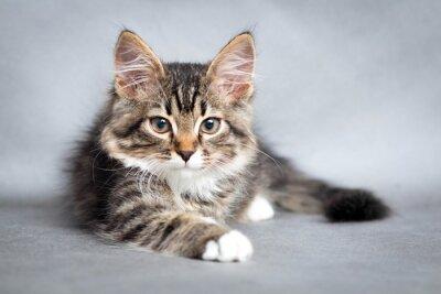 Image portrait de chat couché
