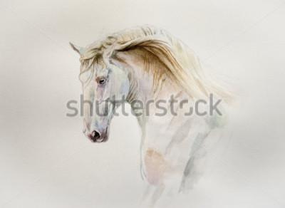 Image portrait de cheval aquarelle lusitanien