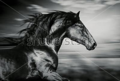 Image portrait du cheval de course espagnol, photo noir et blanc