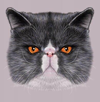 Image Portrait illustratif de Maine Coon. Mignon chat bicolore domestique aux yeux verts.