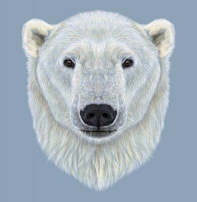 Image Portrait, polaire, ours