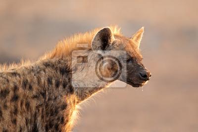 Portrait repéré hyène, Parc National d'Etosha