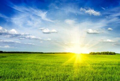 Image Printemps, été, vert, champ, paysage, lanscape