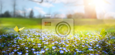 Image printemps nature abstrait; fleur de printemps et papillon
