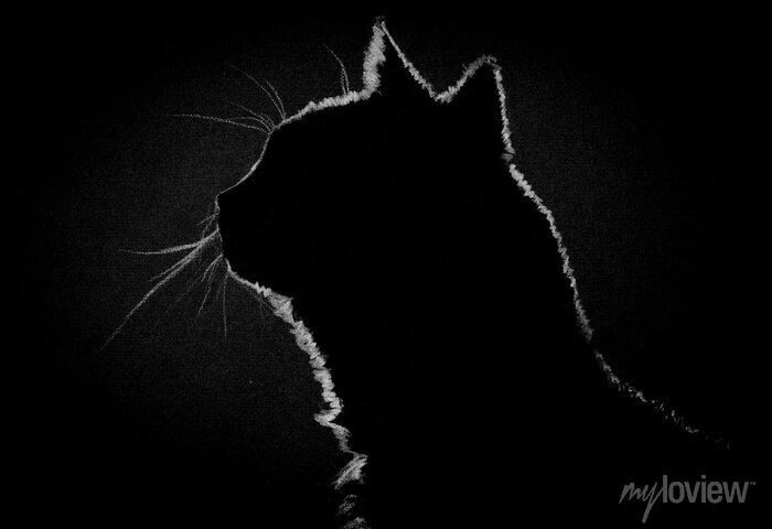 Image Profils chat dans le noir