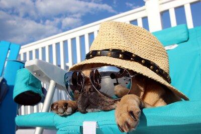 Image Pug Détente dans Beach Chair