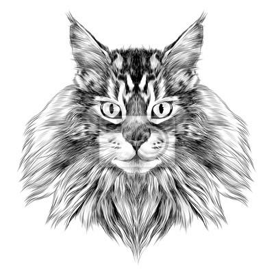 Race de chat maine coon face croquis vecteur noir et blanc - Chat dessin noir et blanc ...