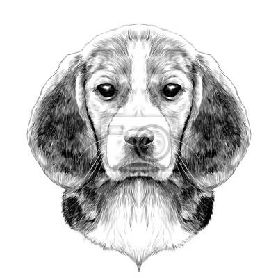 Image Race Tête De Chien Beagle Croquis Vecteur Graphique Dessin Noir