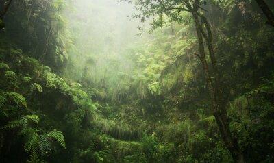 Image Regenwald tropisch nass abenteuer